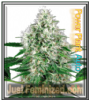 Auto Power Plant Female Mix & Match Seeds
